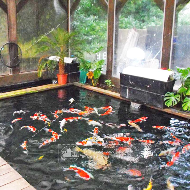 mau-ho-ca-koi-dep-1 Tiểu Cảnh Hồ Cá Koi Sân Vườn