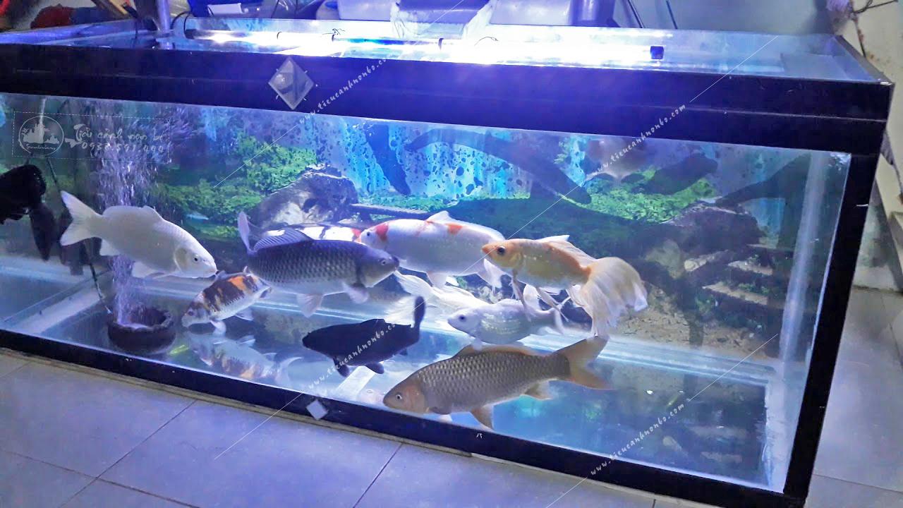 nhung-cach-don-gian-nhat-de-tao-ra-mau-ho-ca-koi-mini-vua-dep-lai-vua-hop-phong-thuy Tiểu Cảnh Hồ Cá Koi Mini Hợp Phong Thủy